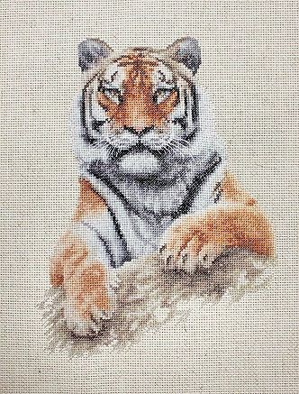 B2289 - Tiger