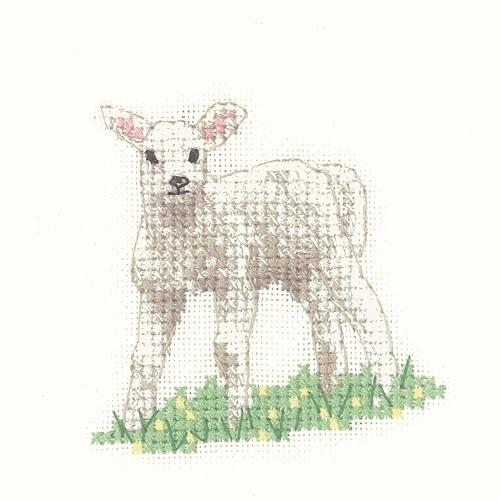 LFLB1187 - Lamb