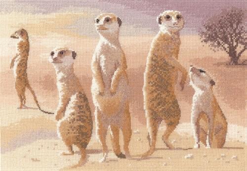 PGMK639 - Meerkats