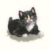 LFBW1021 - Black and White Kitten