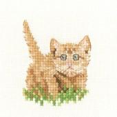LFGK1406 - Ginger Kitten