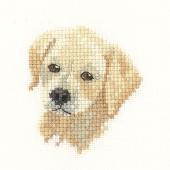 LFGL1037 - Golden Labrador Puppy