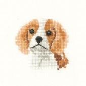 LFSN1028 - Spaniel Puppy