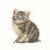 LFTK1024 - Tabby Kitten