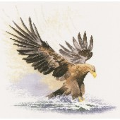 FFEF481 - Eagle in Flight