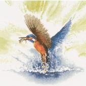 FFKF482 - Kingfisher in Flight