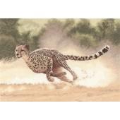 PGCH617 - Cheetah