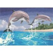 PGDO1084 - Dolphins
