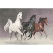 PGWH1022 - Wild Horses